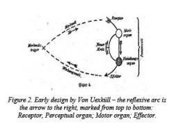 Figure 2. Reflexive Arc of Animal Machine